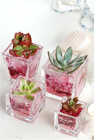 Ice-Pink.jpg